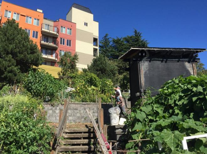 Seattle, WA - Garden